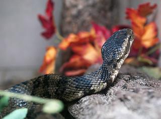 Greenville Zoo 05-24-2011 - Snake 1 | by David441491