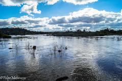 이구아수강