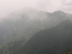Nebelstimmung - Cameron Highlands