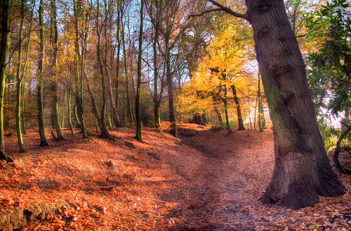 autumn trees red sun sunlight green fall leaves yellow woodland season landscape carpet leaf woods nikon raw falling bark trunk vista upright shedding autumnal hdr bough pallette carpeted tonemapped handheldhdr nikond5100