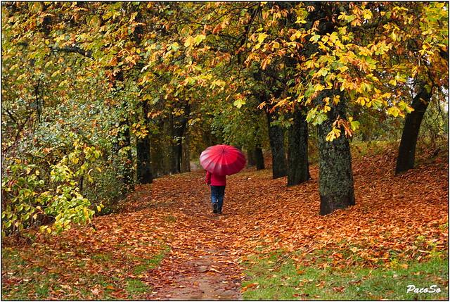 Paseo otoñal bajo la lluvia