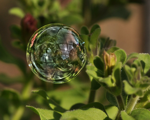 Greenhouse in A Bubble | by Magic_moments.