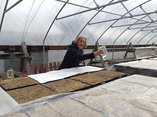 Abby watering containers with tomato seeds up potting at - Master gardeners santa clara county ...