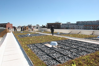 Osborne Association Blue Green Roof 3 | by NYC Water