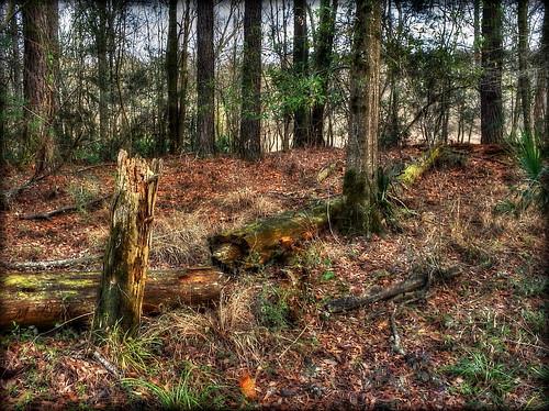 river woods louisiana batonrouge interstate hdri i12 amite denhamsprings