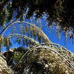 Snowy Bamboo 竹