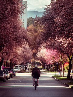 Cherry Blossoms in Vancouver | by moonstream