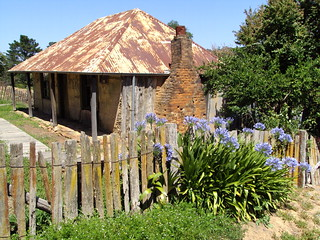 Agapanthus and quaint cottage in Hill End New South Wales. The cottage dates from the gold rush era of the 1870s when Hill End was booming. | by denisbin