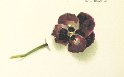 Image taken from page 24 of 'Pansies for Thoughts, culled from the garden of literature. [With coloured illustrations.]' | by The British Library