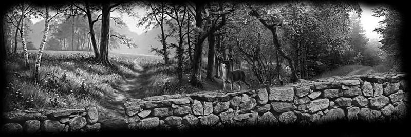 Deer Rock Fence