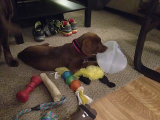 We've tried a lot of different chew toys to curb teething pains. Today she decided a milk jug works best. | by wantmoore