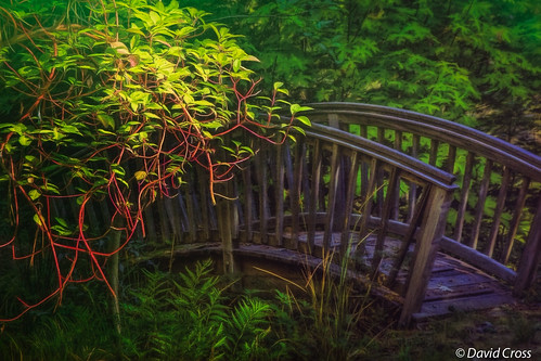 california bridge northerncalifornia garden landscape nevadacity zen dairy nevadacounty sierranevadarange sierranevadafoothills canon7d canon1585mmusmis lightroom5 topazsw daisybluemineroad floweressenceservices