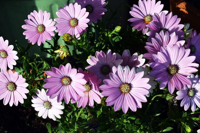 Heureux jeudi fleuri !  Feliz Quinta Flower !