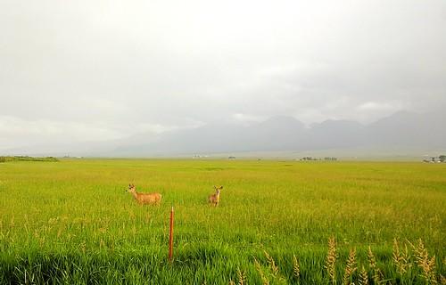 picnic deer muledeer sangredecristomountains custercounty rollandfiddlecamp