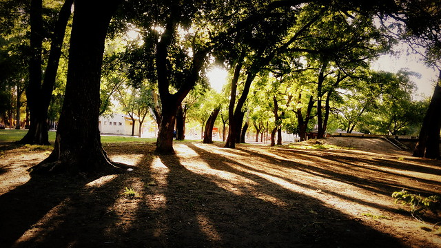 Parque - Bosque