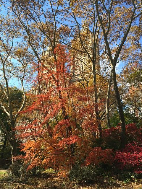 日, 2013-11-10 12:10 - Central Park