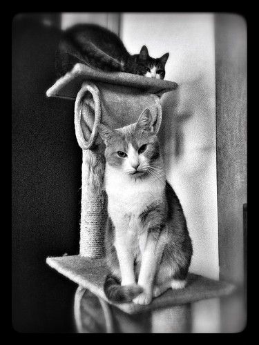 Cats on Throne | by mogul