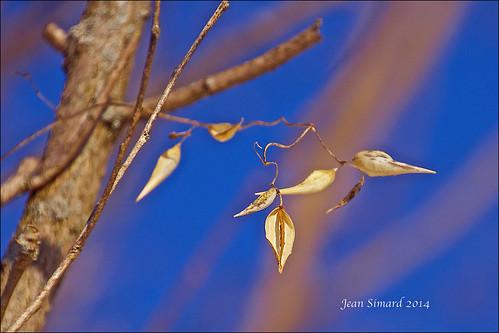 blue trees sunlight ontario sunrise bluesky seedpods cobourg lucaspoint