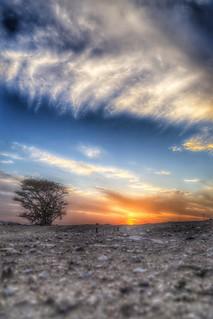 #sky #sunset #tree | by ajm_althani