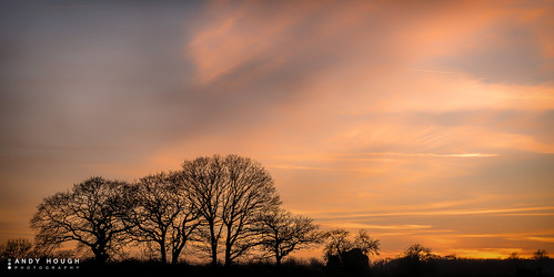 trees sunset england sky color colour clouds evening unitedkingdom sony silhouettes ewelme britwellsalome a99 sonyalpha andyhough slta99v andyhoughphotography