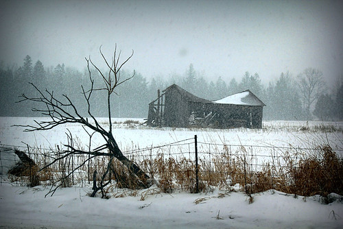 Beaten by the Elements | by Brian 104