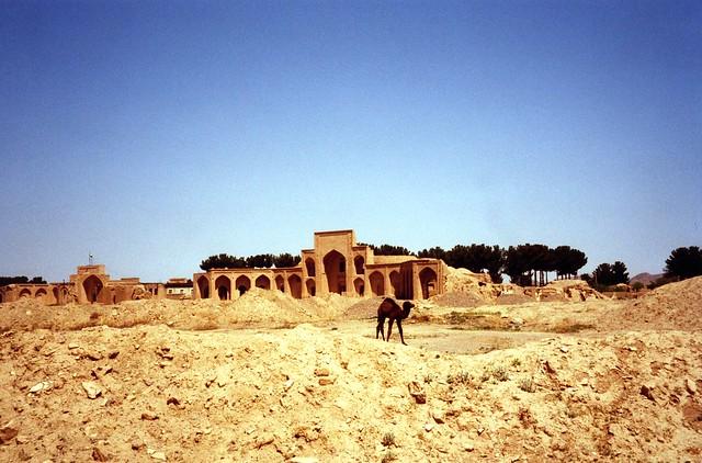 Iran - halte sur la route de la Soie - Camels on the ancient Silk Road