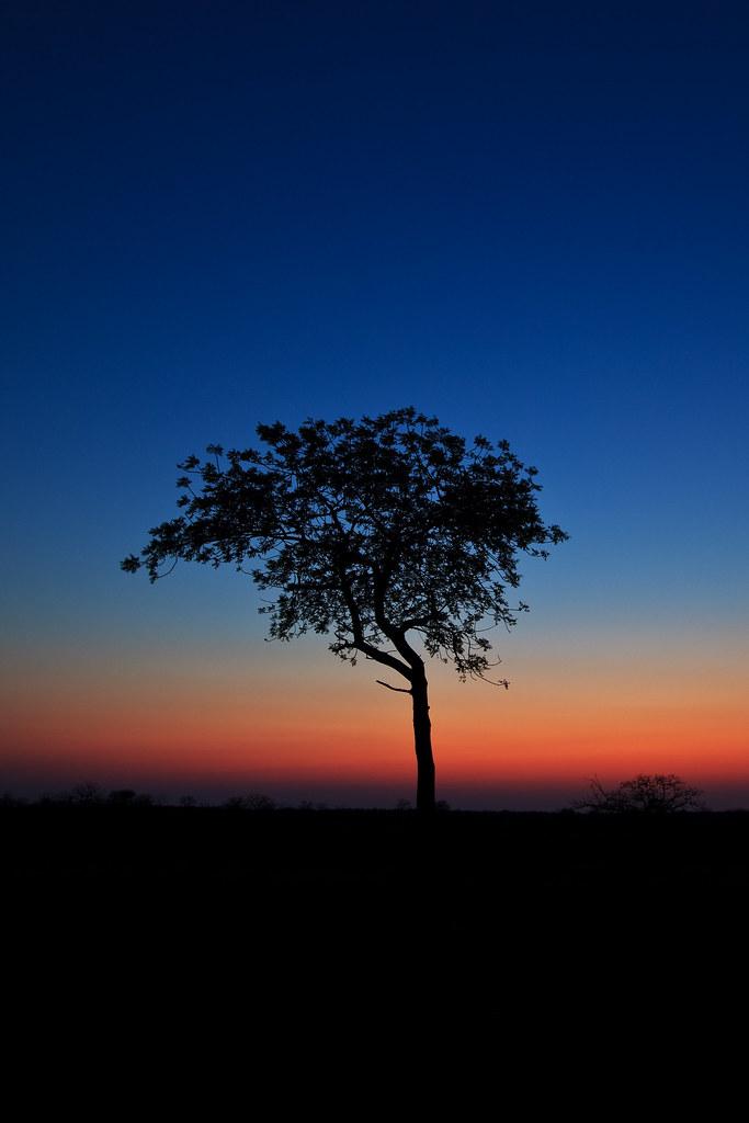 Lone Tree on the Savannah