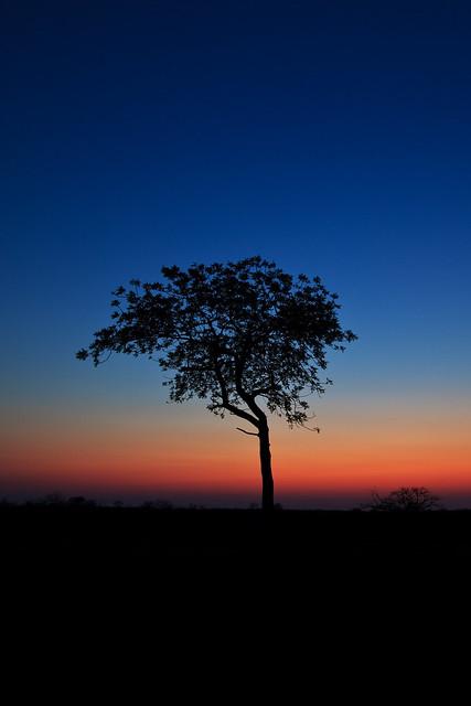 Previous: Lone Tree on the Savannah