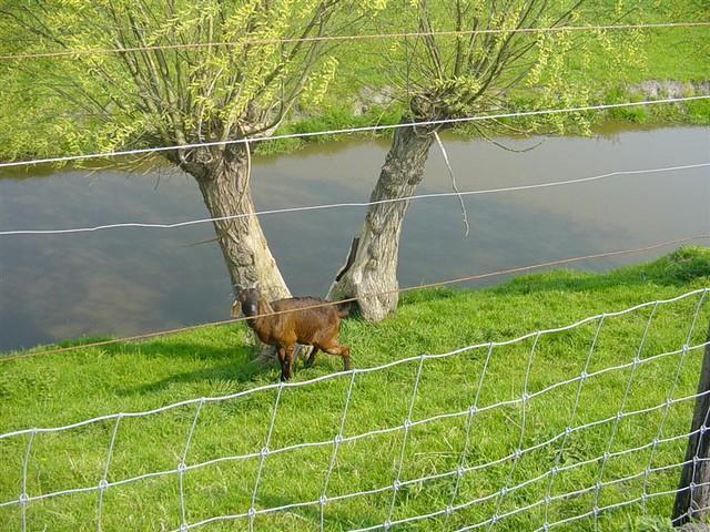Hoorn          07-05-2006 30Km  (9)