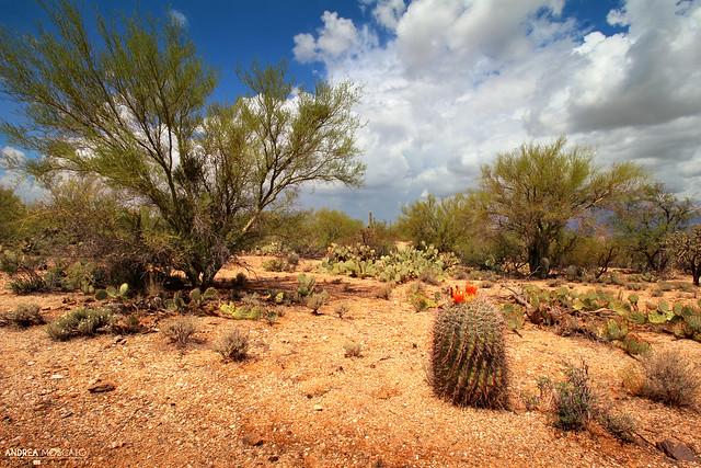 Saguaro National Park East - Tucson, Arizona