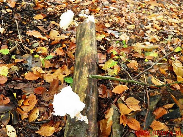 20-10-2012     Wedeblick-   Driebergen        25 Km (99)