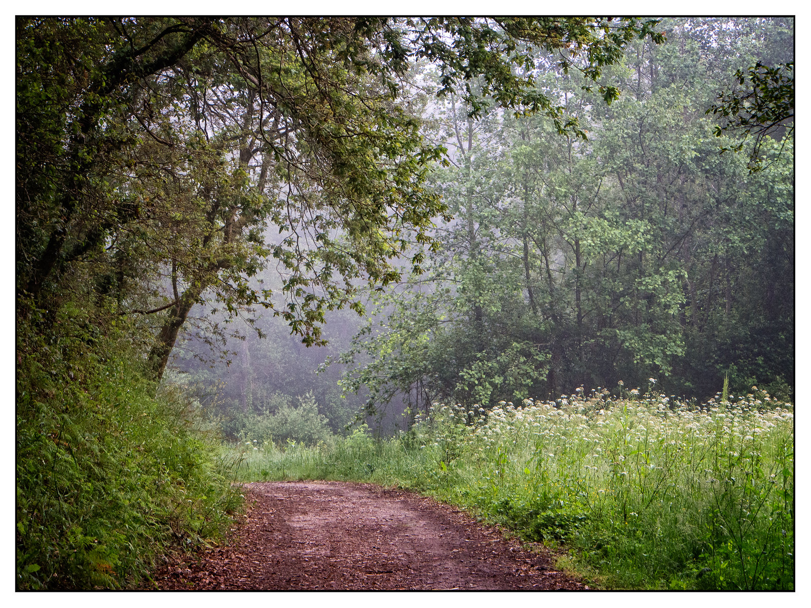 Walking in the rain (1 of 1)