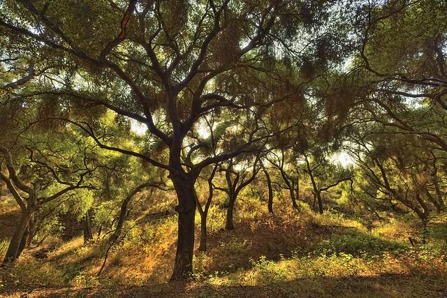 nikon nikkor 15mm 5.6 D800 Lake hodges scrub oaks 3