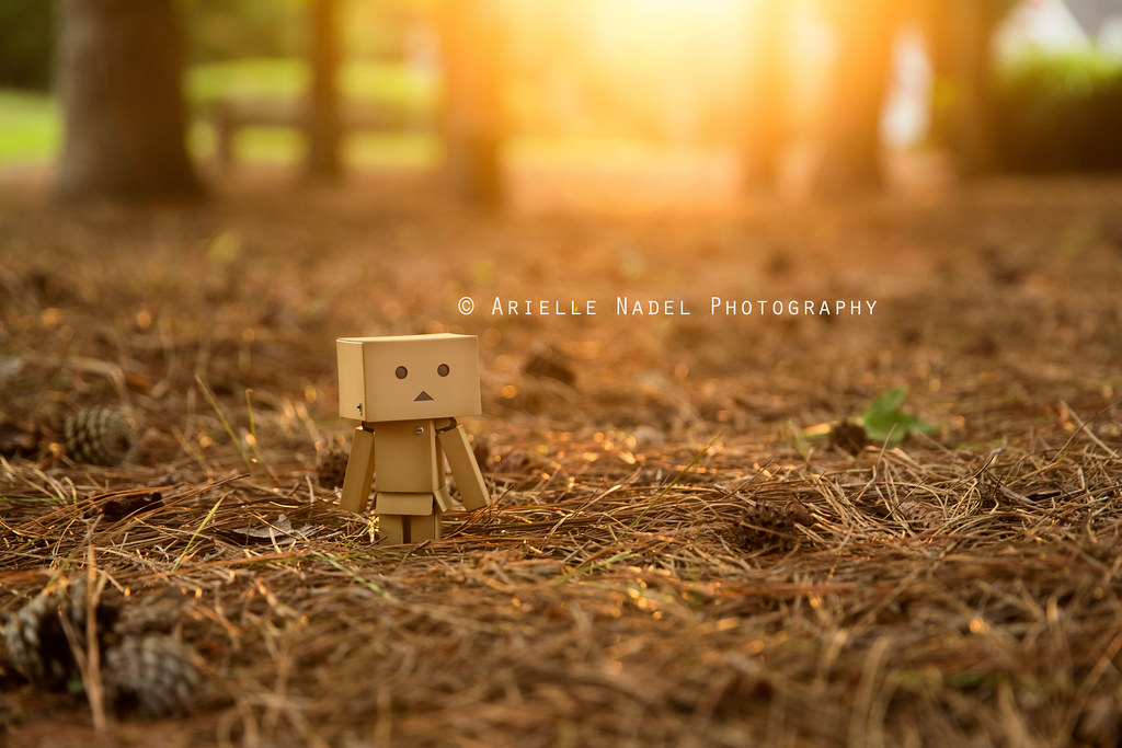 With the Golden Light   58/100 Danbo sets out to explore