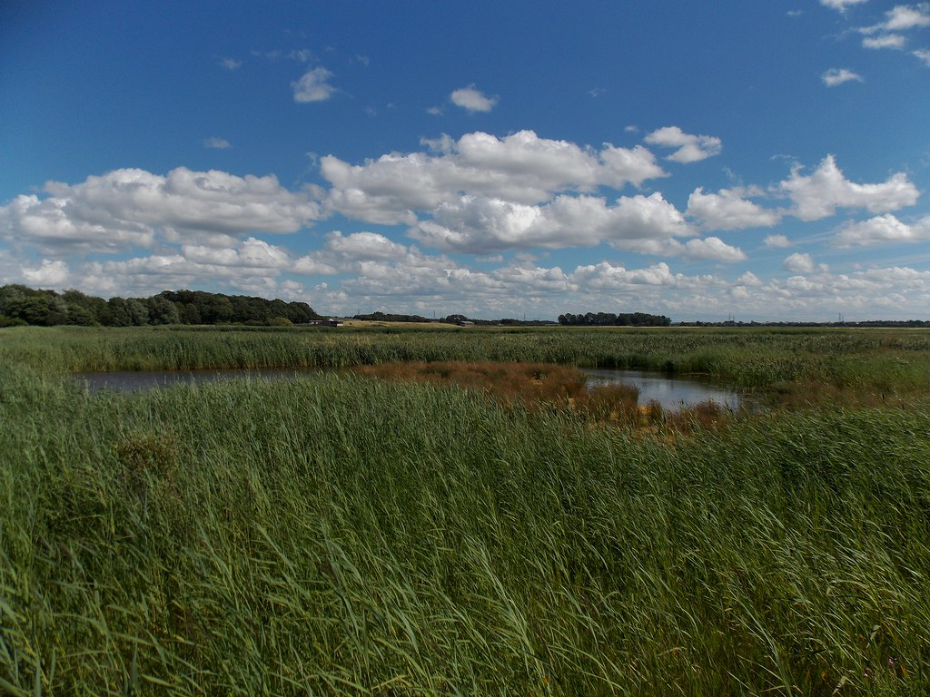 RSPB Burton Mere Wetlands in the Wirral, Cheshire, England