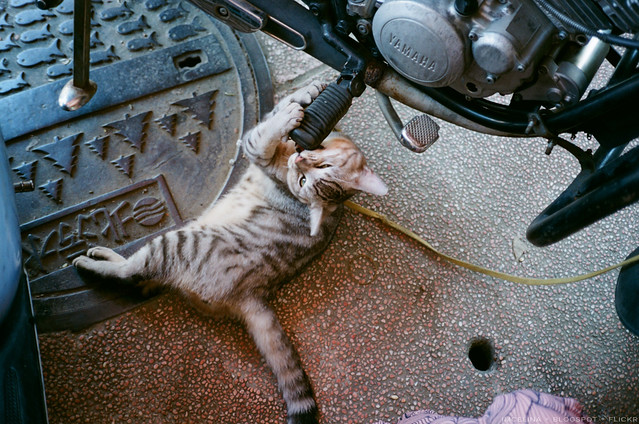 迪化街。貓