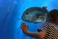 Up close with a MASSIVE fish - Dubai Aquarium