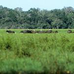 1983-7-29 srilanka