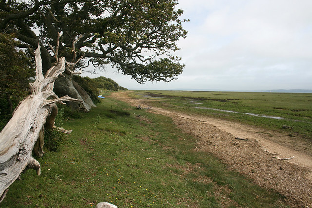 The shore at Shotts Lane, New Forest