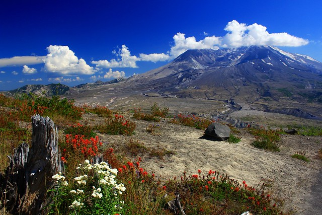 Wildflowers  and Volcano