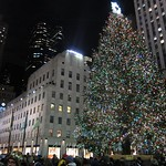 The tree at night with all the people