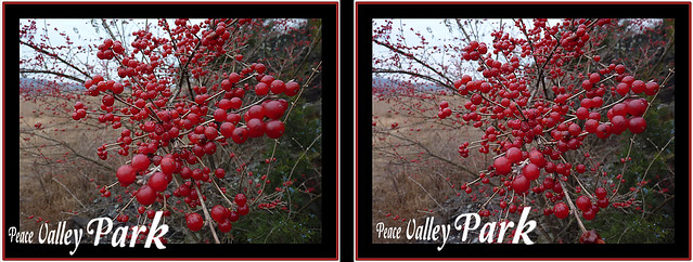 Peace Valley Berries 3D Crosseye 2