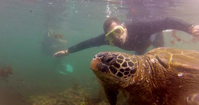 Sele haciendo snorkeling junto a una tortuga marina