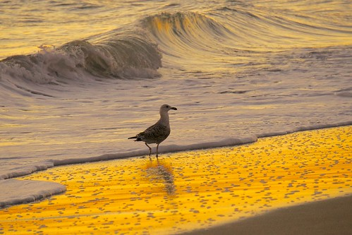 ocean bird beach surf florida seagull tide indialantic
