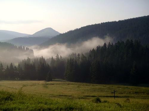 mist fog slovakia spruces donovaly