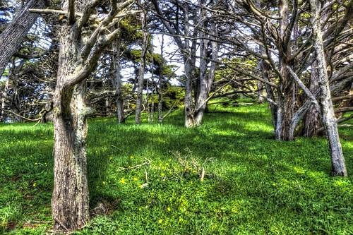 pointlobosreserve allanmemorialgrove trees grass green yellow monterey montereypeninsula california joelach