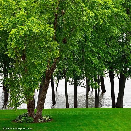 trees nature water river mississippi illinois backyard underwater flood roadtrip fulton 2013