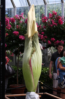 Corpse Flower | by halo969