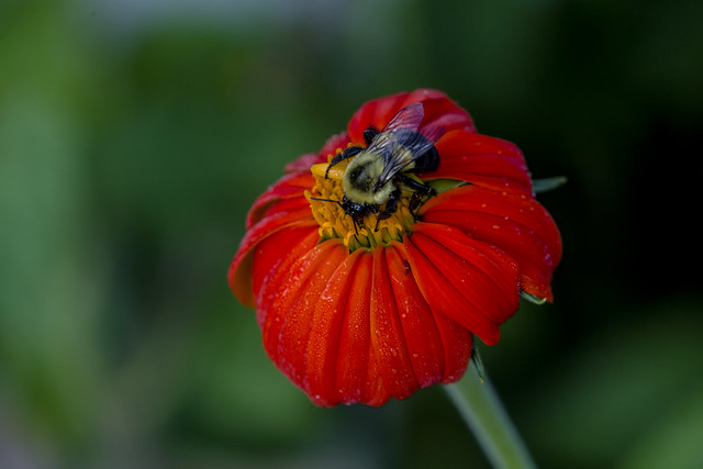 Bee getting its prize