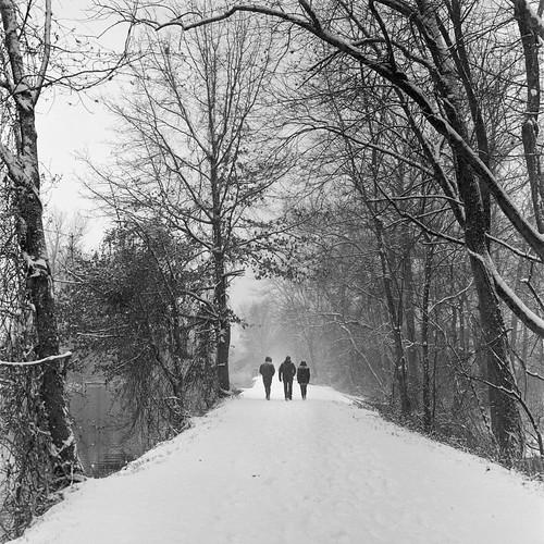 delawareandraritancanal xtol11 princeton hasselblad500c landscape trees towpath trix nj nature drcanal kingston forest woods film snow newjersey unitedstates us